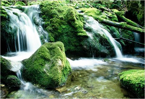 Az Élet vize