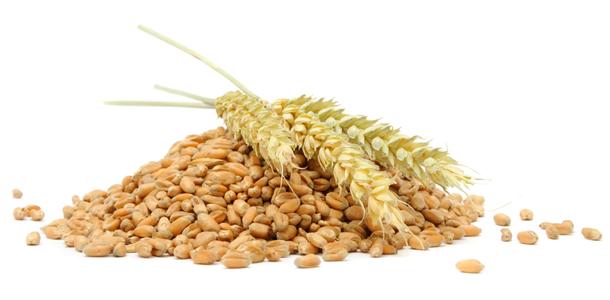 Péter, Pál napja, az aratás kezdete