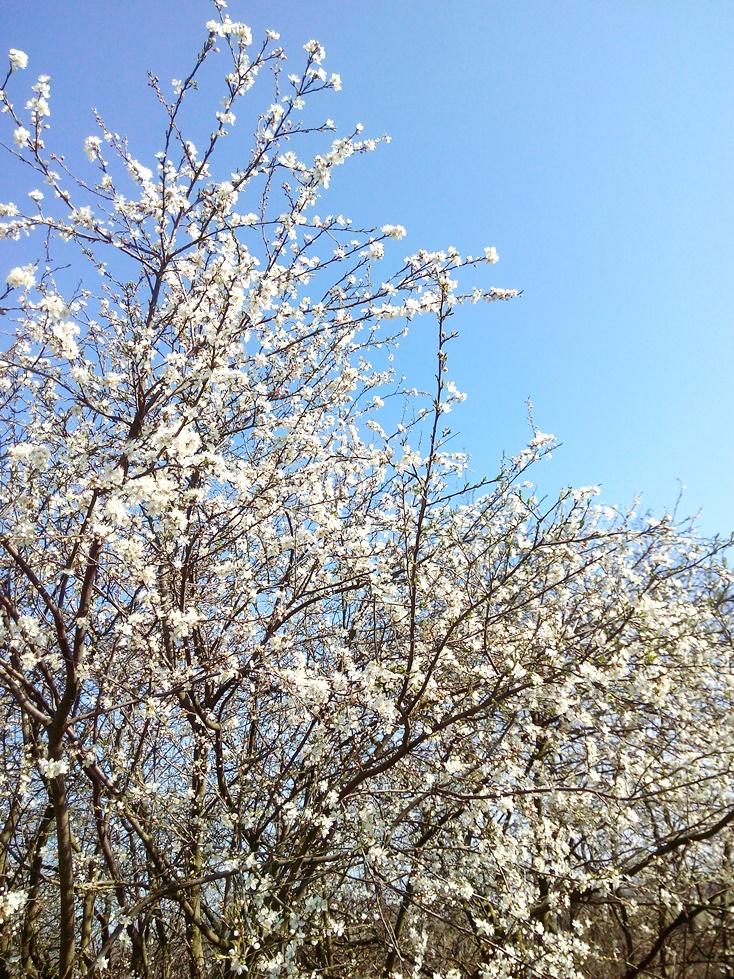Tavasz - Cs. István verse